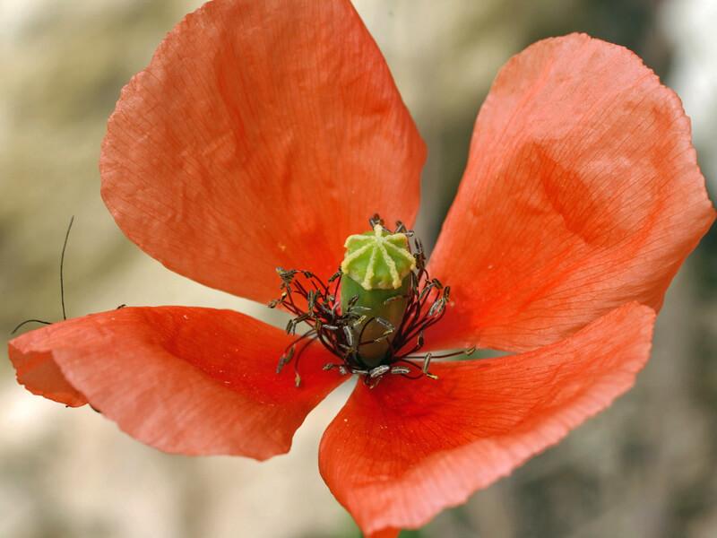 par la couleur des fleurs