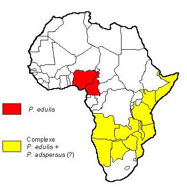 Répartition de P. edulis en Afrique (adaptée d'après RÖDEL, 2000)